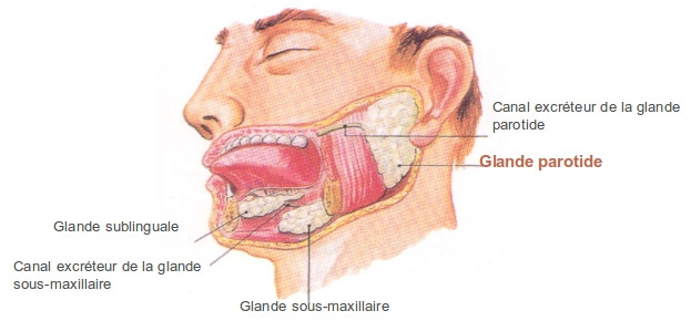 parotidectomie-1