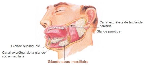 sous-maxillaire-1